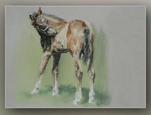 anw_foal2_web