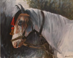 jenw_horsefromchittaurgarthindia_web