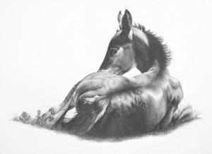 Victoria Manser Sleepy foal