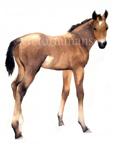 Victoria-Manser-bay-foal