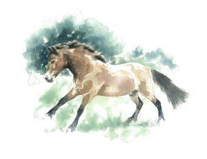 Claire-Martinexmoor-pony-smaller
