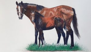 Caryn Fisher Mare and foal