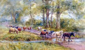 Shetlands in the Lane