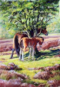 Backscratching, Exmoor
