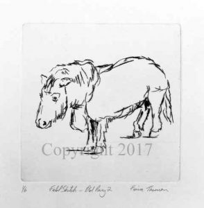 Field Sketch – Old Pony II